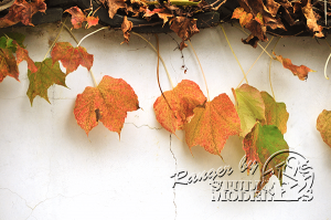 autumn-color00021