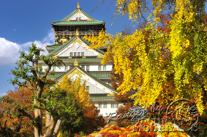 autumn-color00023