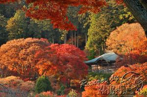 autumn-color00035