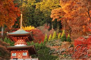 autumn-color00036