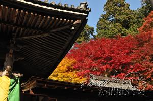 autumn-color00037