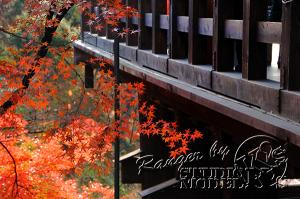 autumn-color00039