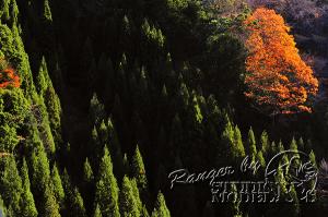 autumn-color00041