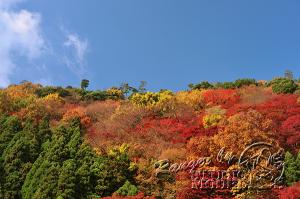 autumn-color00044
