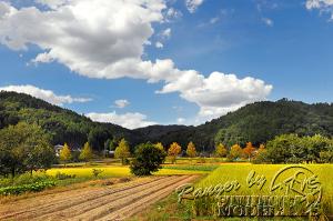autumn-color00045