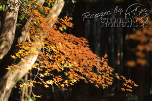 autumn-color00046