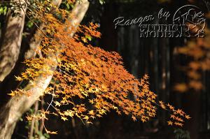 autumn-color00046