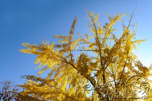 autumn-color00048