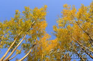 autumn-color00049