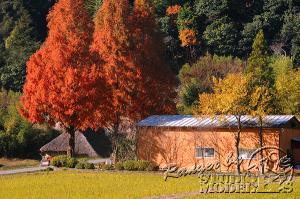 autumn-color00050
