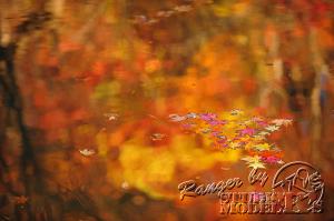 autumn-color00052