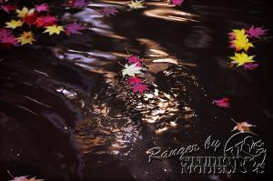 autumn-color00053