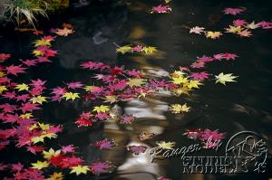 autumn-color00054