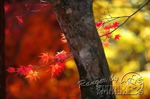 autumn-color00055