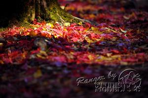 autumn-color00056
