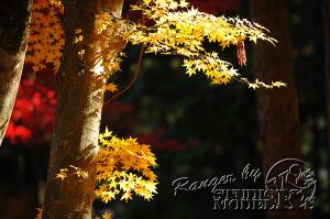 autumn-color00057