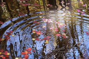 autumn-color00058