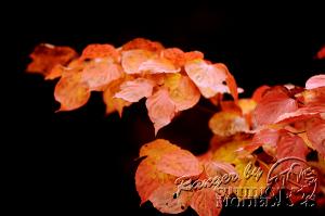 autumn-color00059