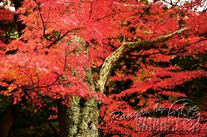autumn-color00060