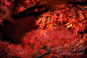 autumn-color00061