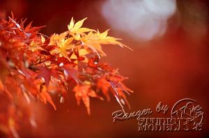 autumn-color00062