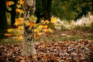 autumn-color00063