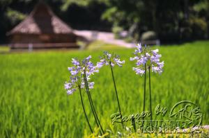 flower58