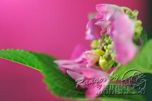 flower62