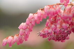 flower65