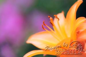 flower67