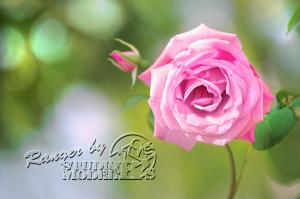 flower75