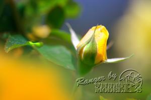 flower88